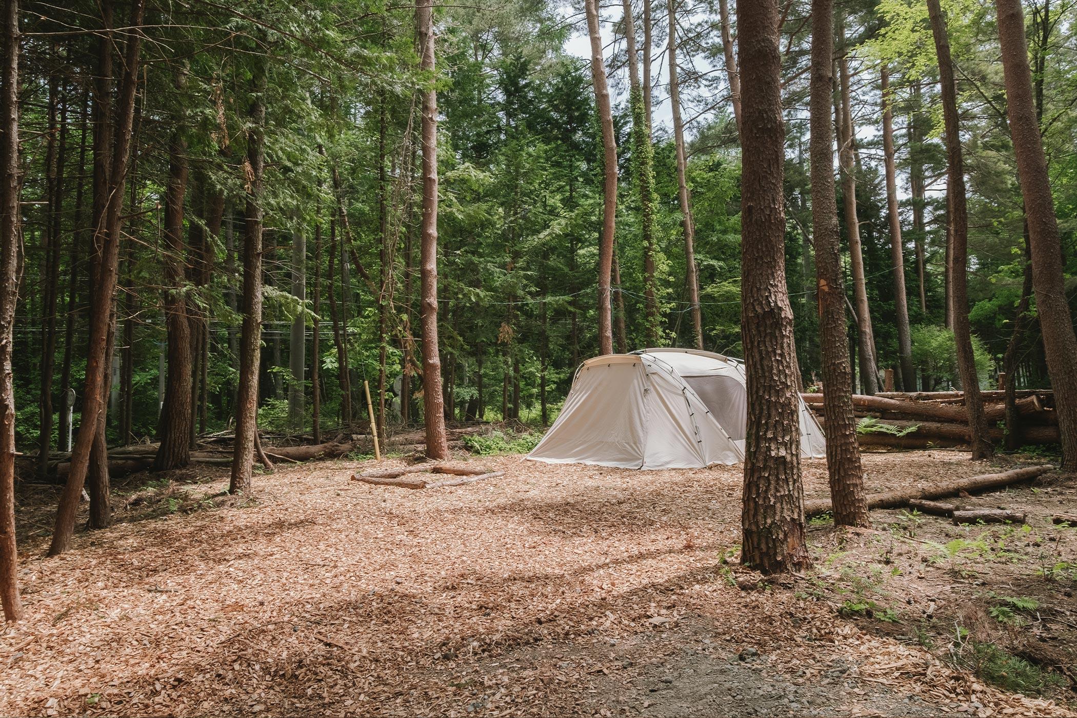 森林サイト L