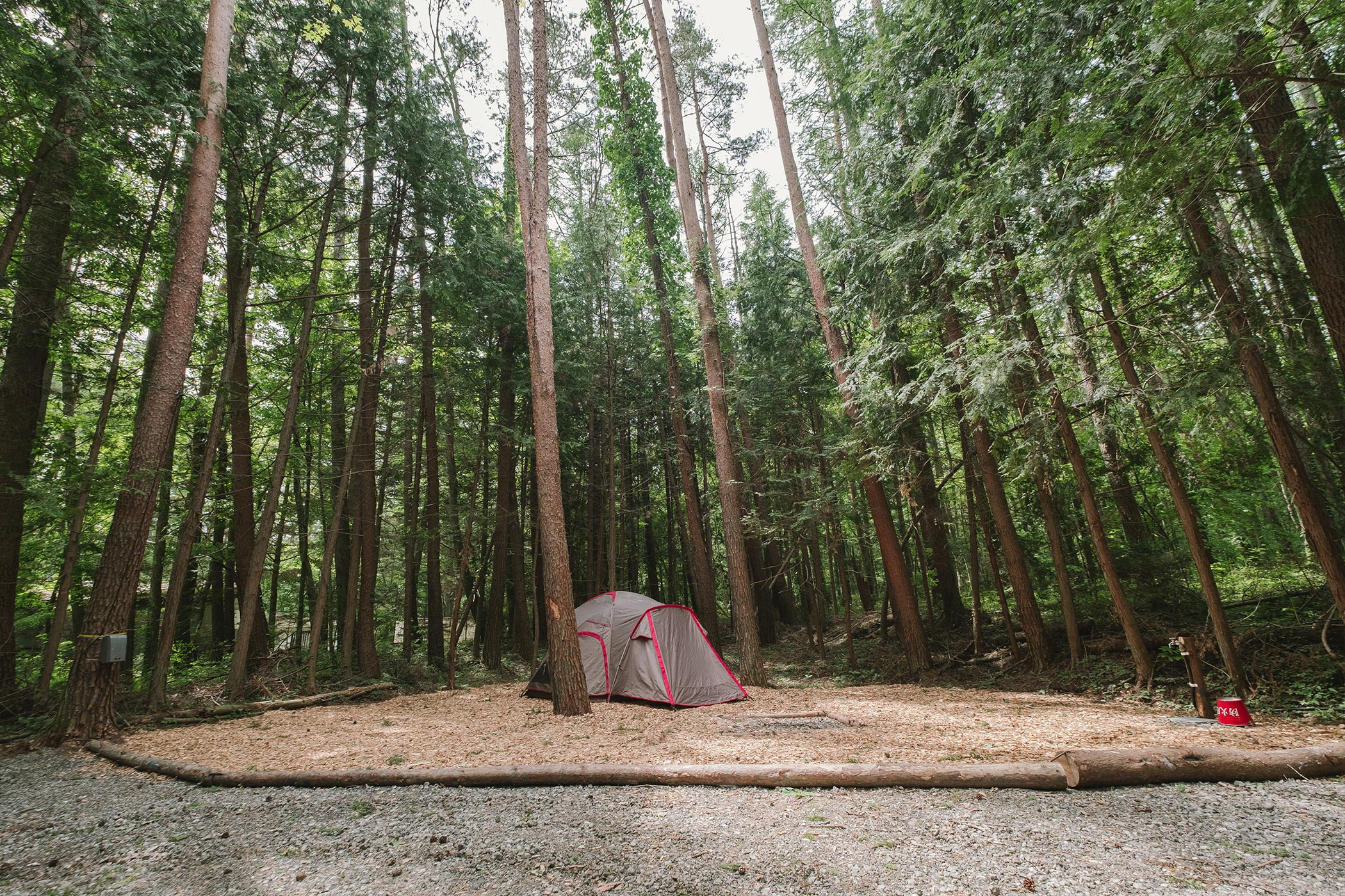 森林サイト M