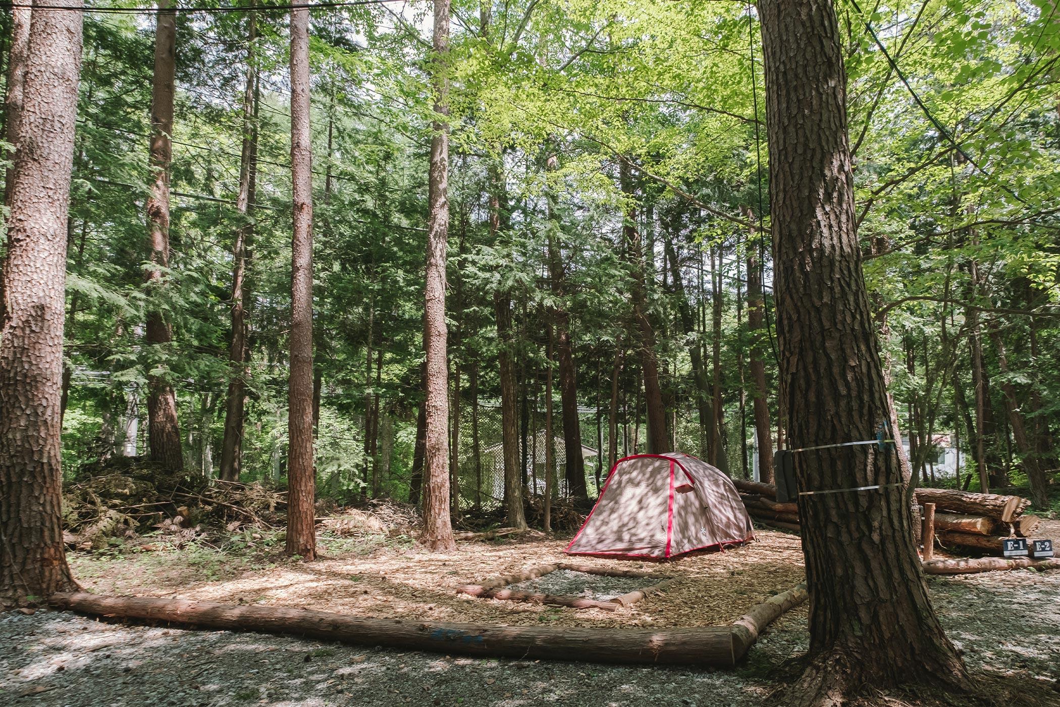 森林サイト S